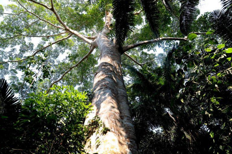 Con plataforma satelital detectan tala y deforestación de bosques