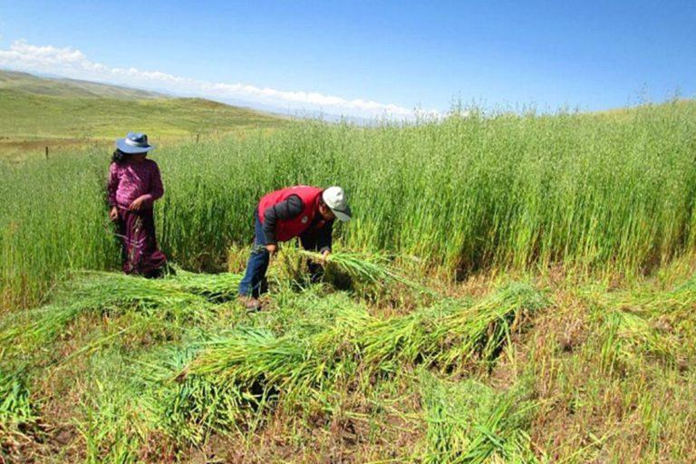 Agrobanco: más de 4,000 agricultores obtendrán créditos en 48 horas