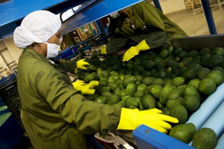 Sector agropecuario creció 2.1% en primer semestre, pese al covid-19