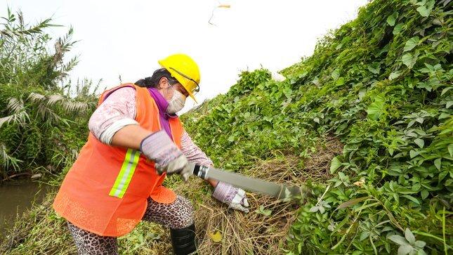 Mujeres rurales representan el 35% de jornales en mantenimiento de canales y drenes