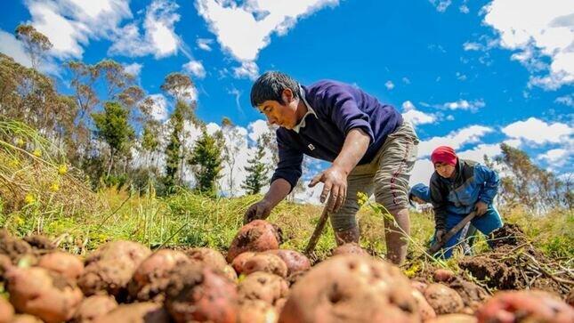 Agricultores peruanos reafirmaron su fortaleza en en la etapa más difícil de COVID-19