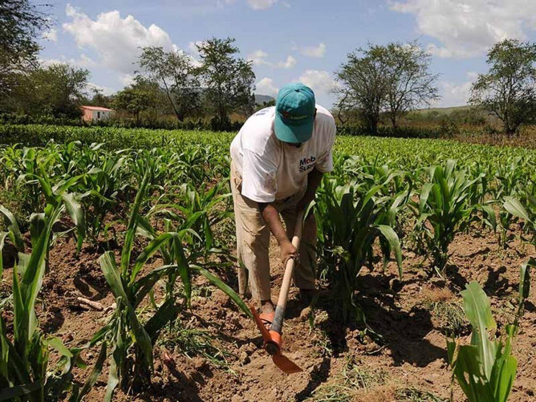 Impulsan siembra y cosecha de agua a favor de los agricultores de Piura