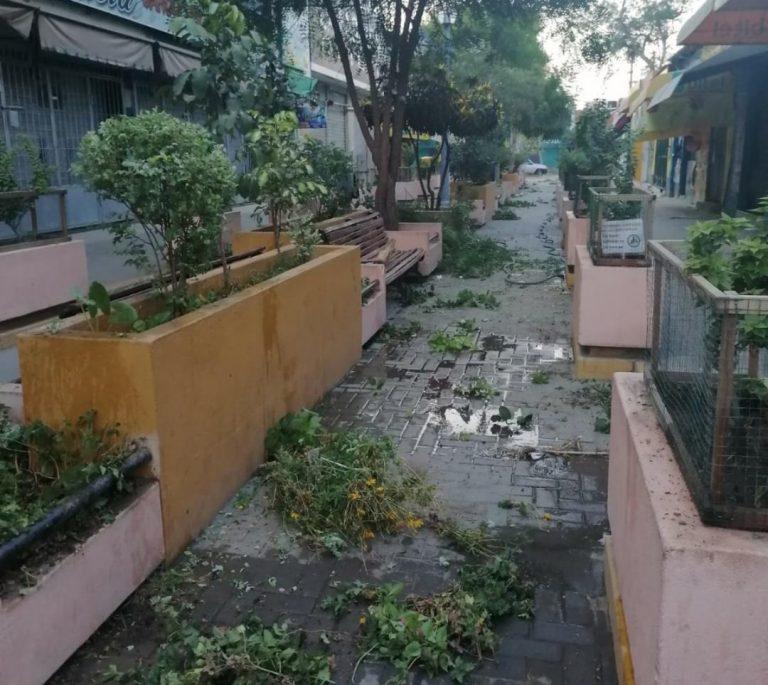 Realizan mantenimiento de áreas verdes en pasaje Enrique Palacios