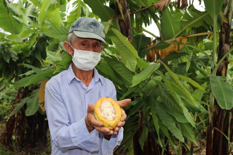 2 mil 500 productores son capacitados en el manejo integral de cacao en Piura