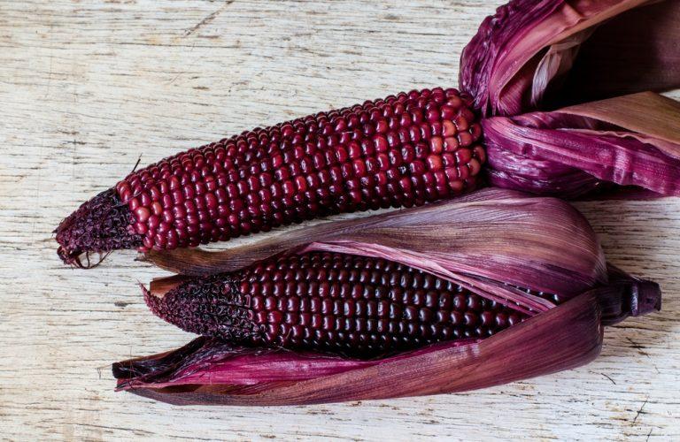 Desarrollan nueva variedad de maíz morado rica en antioxidantes