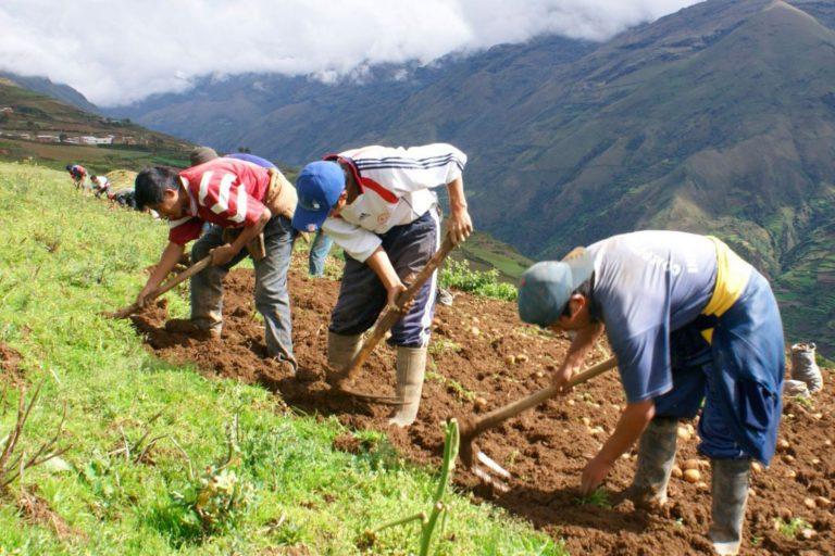 Más de 286,000 agricultores accedieron a créditos en última década