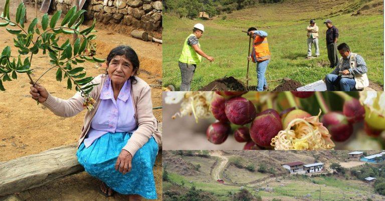 Con reforestación en la microcuenca de Pusmalca se tendrá más agua para la agricultura en Piura
