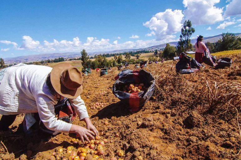 Día del Campesino: Agrobanco otorgó más de S/ 6,000 millones en créditos