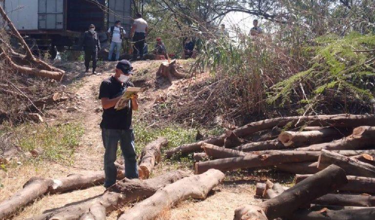 Fiscalía investiga a cinco personas por cometer delitos ambientales en Piura