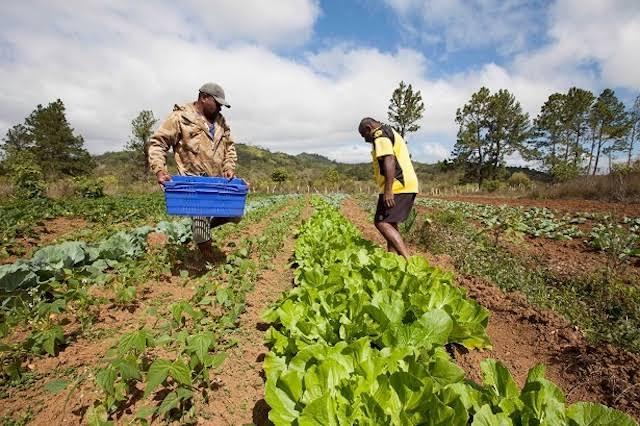 Dirección Regional de Agricultura trabaja plan para reforzar lucha contra anemia y desnutrición