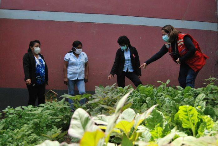 Estudiantes complementan alimentación de Qali Warma con huertos en Huancabamba
