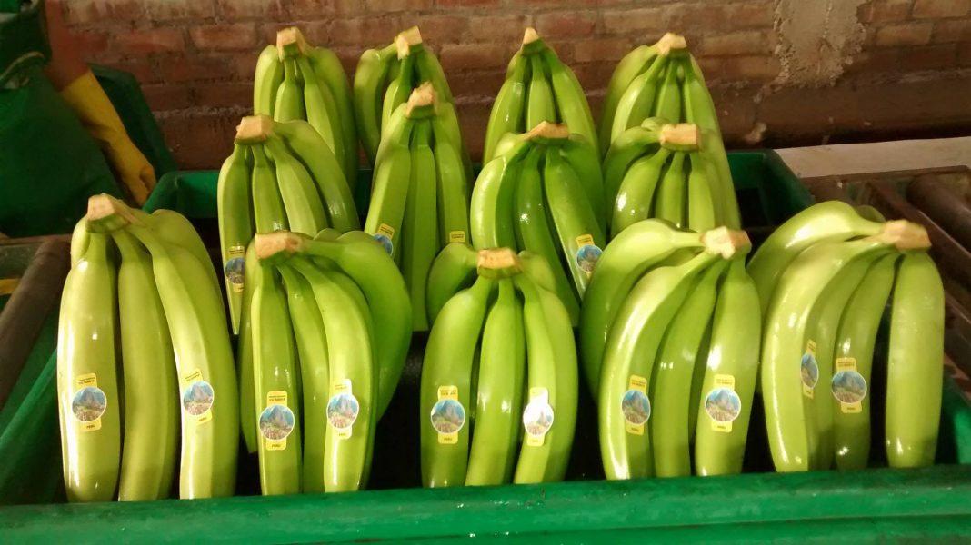 Exportaciones de alimentos piuranos alcanzaron los US$ 979 millones 185 mil hasta julio